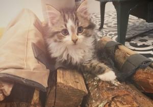 baby neptune kitty